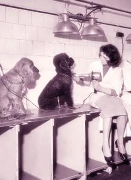 storia del barbone asciugatura cane Fido Mon Amour